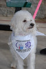 Bark For Life : American Cancer Society Event