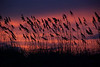 Sapelo Sunset and Sunrise 2012 :