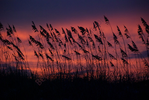 Sapelo Sunset and Sunrise 2012